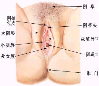 女性阴部真实照片:详解女人真实完美阴道图片-第2张图片-爱薇女性网