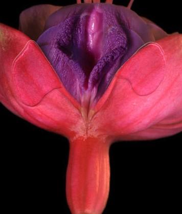 女性阴部真实照片:详解女人真实完美阴道图片-第4张图片-爱薇女性网