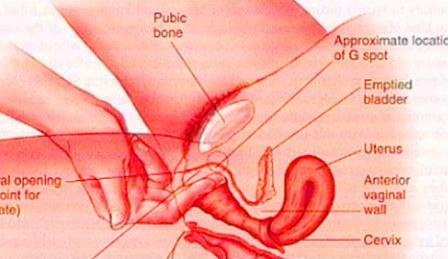 美女的阴道:图解健康的女性私处样子-第3张图片-爱薇女性网