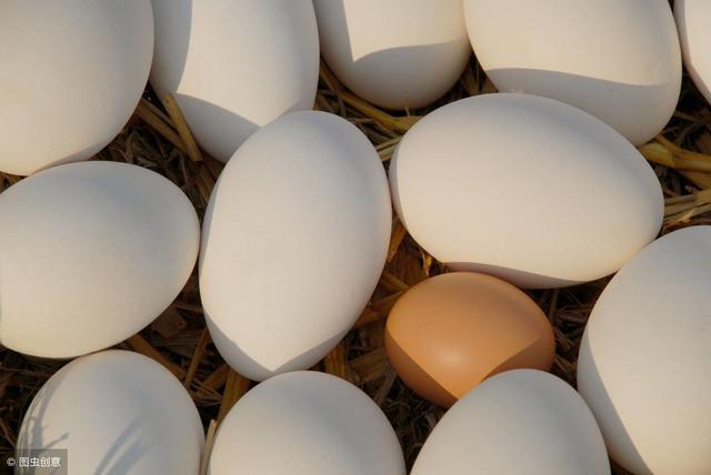 鹅蛋怎么做好吃,鹅蛋的功效与作用-第1张图片-爱薇女性网
