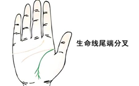 早死的手相,6种早死的手相分析-第5张图片-爱薇女性网