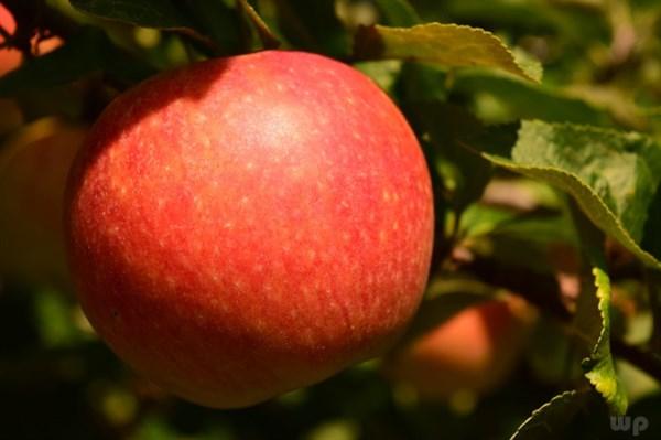 十大低糖水果排行榜,女人应该多吃水果-第2张图片-爱薇女性网