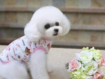 世界十大绝不咬人的狗,金毛/拉布拉多/哈士奇这三种最受欢迎-第10张图片-爱薇女性网