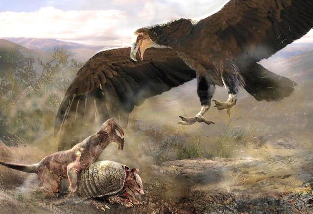 幸好这30种动物灭绝了,阿根廷巨鹰翼展可达7米