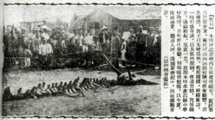 辽宁营口坠龙事件真相揭秘-第4张图片-爱薇女性网