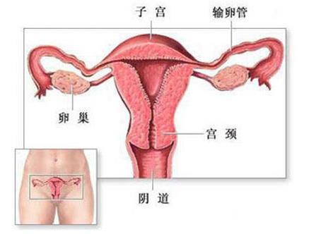 直击私处神秘构造!图解健康的女性私处长啥样-第3张图片-爱薇女性网