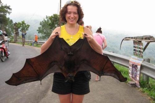 世界最大的蝙蝠,马来大狐蝠翼展可达2米比人还大