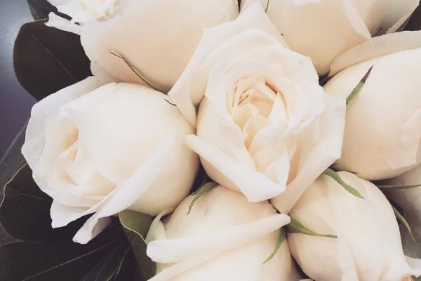 白玫瑰代表什么意思?表达纯洁浪漫的爱情-第3张图片-爱薇女性网