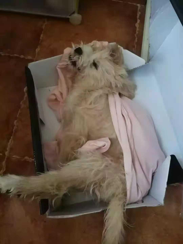 贵州一小区8条狗遛弯后中毒身亡,狗主人情绪崩溃大哭-第3张图片-爱薇女性网