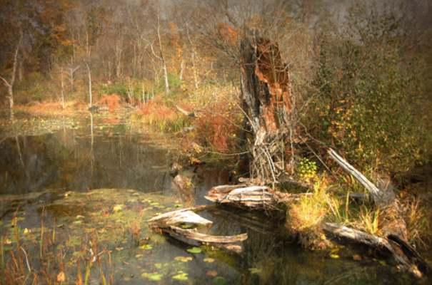 世界上最可怕的沼泽:美国曼查克沼泽地,被称为幽灵沼泽-第1张图片-爱薇女性网