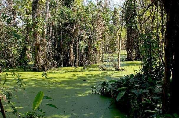 世界上最可怕的沼泽:美国曼查克沼泽地,被称为幽灵沼泽-第2张图片-爱薇女性网