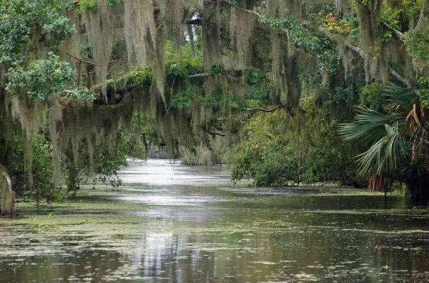 世界上最可怕的沼泽:美国曼查克沼泽地,被称为幽灵沼泽-第3张图片-爱薇女性网