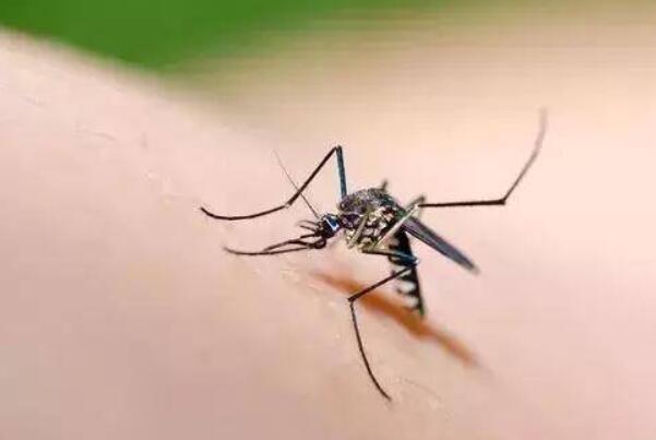 为什么有些人招蚊子咬:出汗多、体温高的人更容易招蚊子咬-第4张图片-爱薇女性网